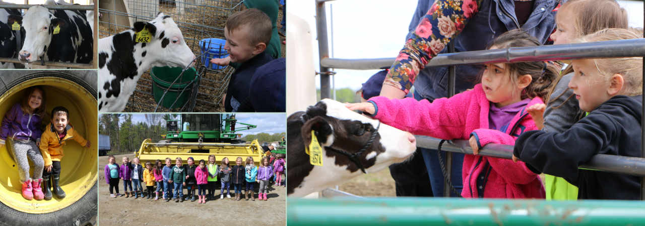 photo shows collage of pictures of students petting cows